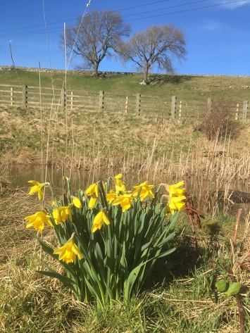 Springtime in the Dales